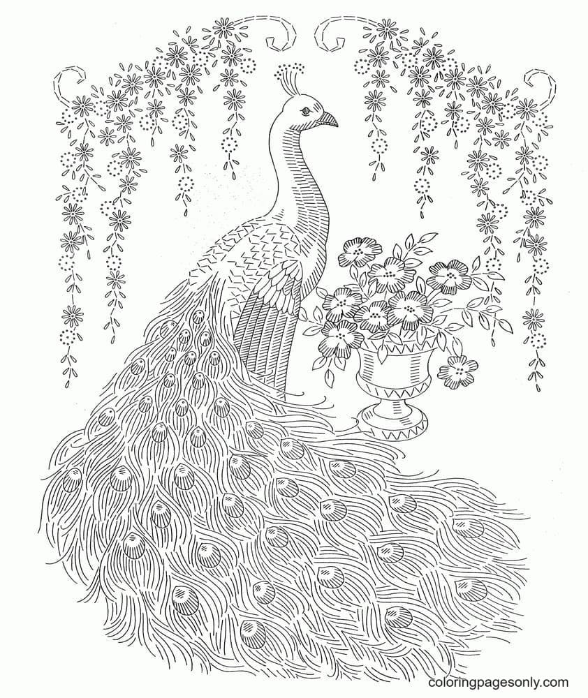 Peacock Drawings0 Coloring Page
