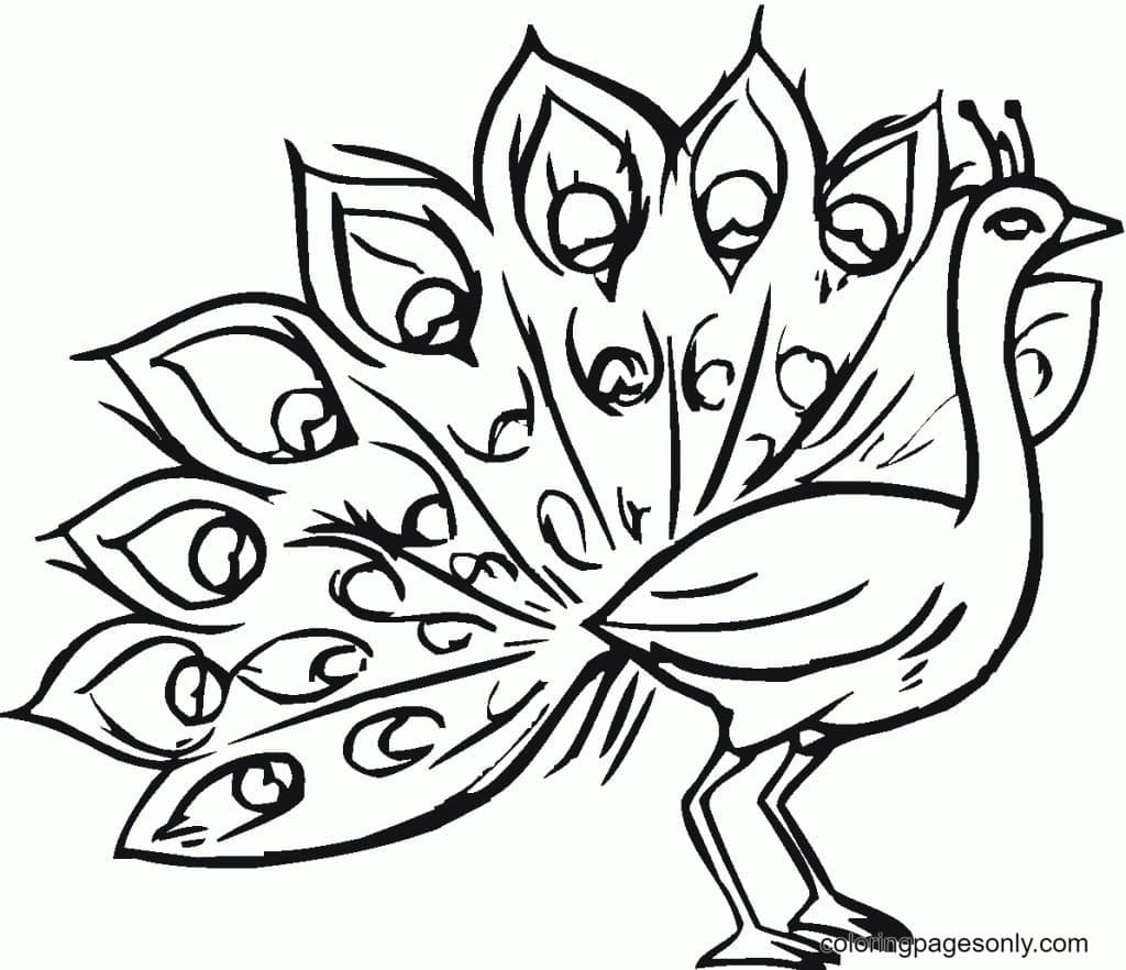 Peacock Picture 3 Coloring Page