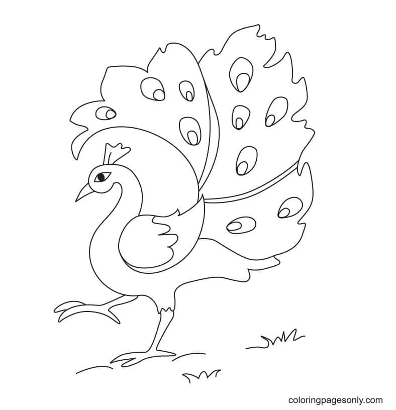Peacock Picture Coloring Page