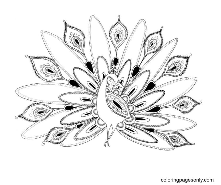 Peacock Printable 3 Coloring Page