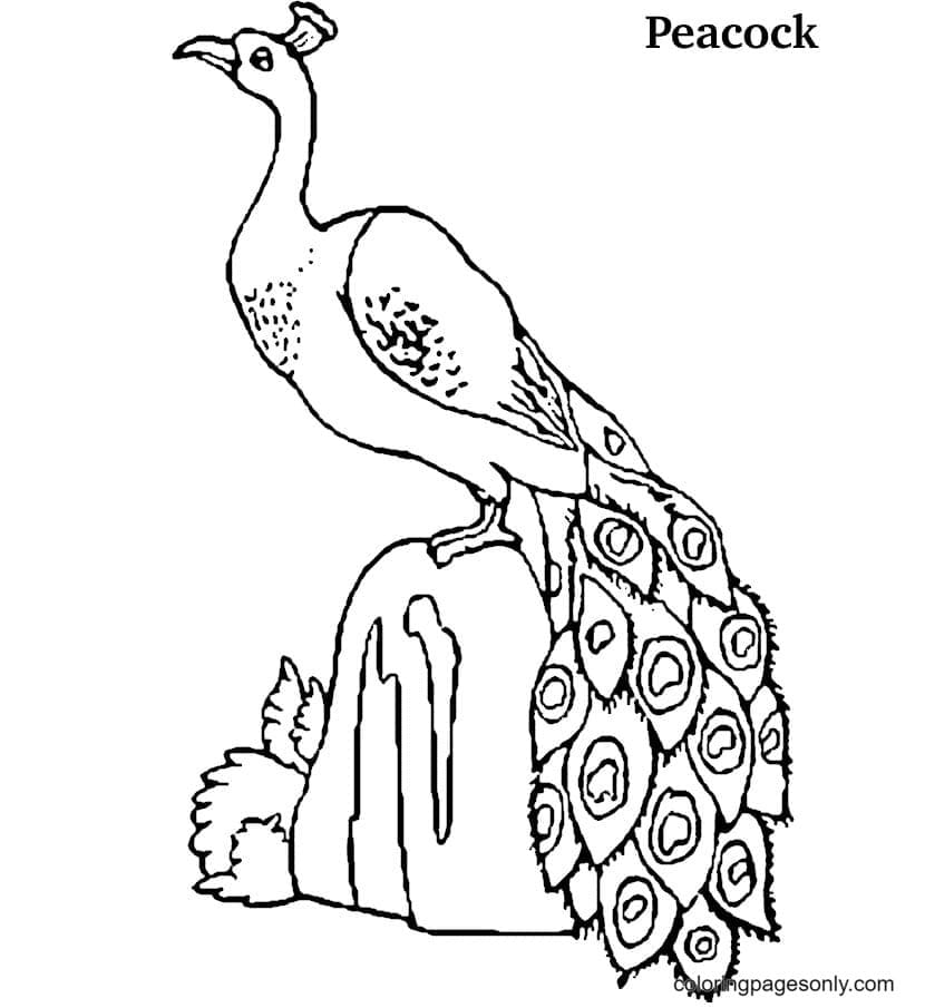 Peacock Standing on Stone Coloring Page