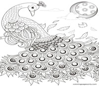 Peacock Coloring Pages