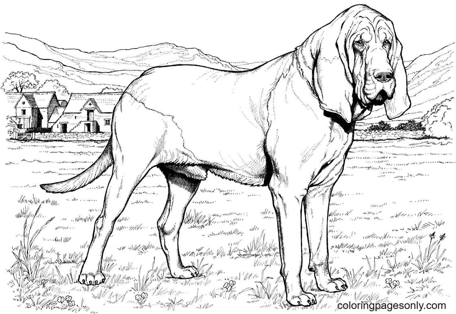Printable German Shepherd Puppy Coloring Page