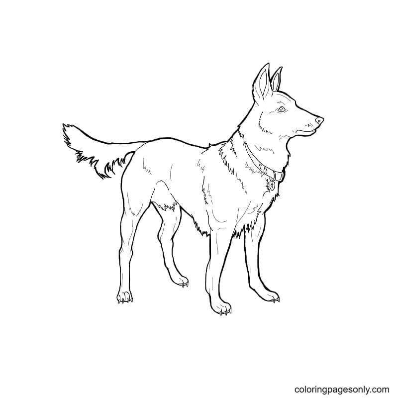 Printable German Shepherds Coloring Page