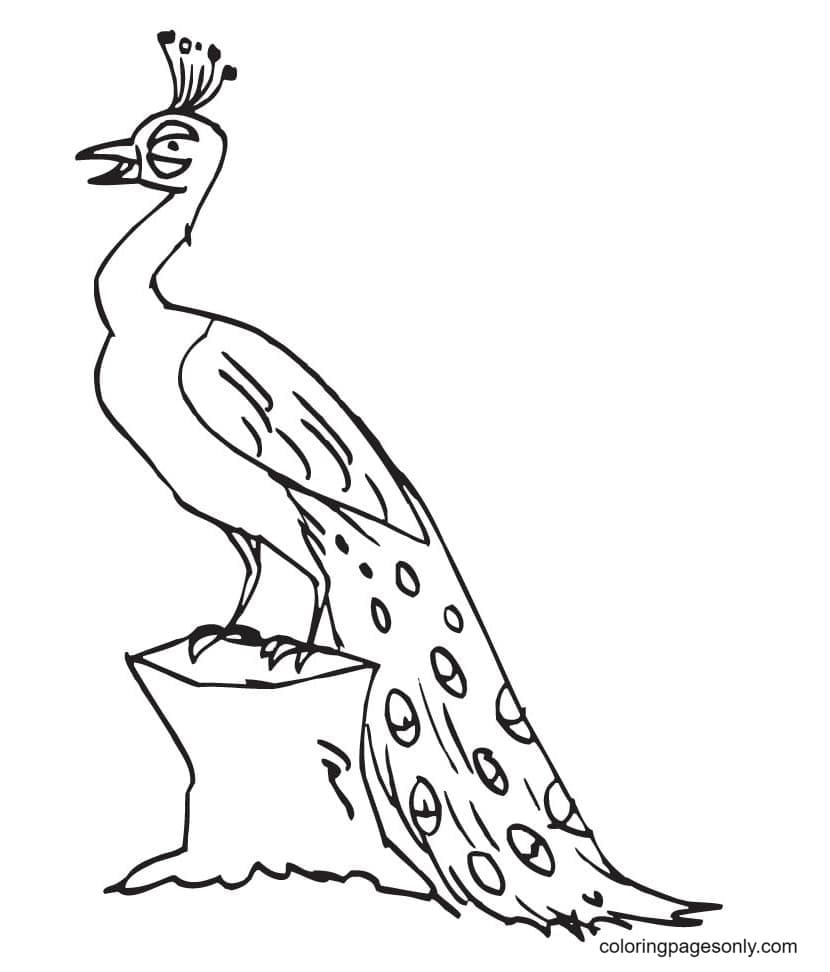 Printable Peacock 0 Coloring Page