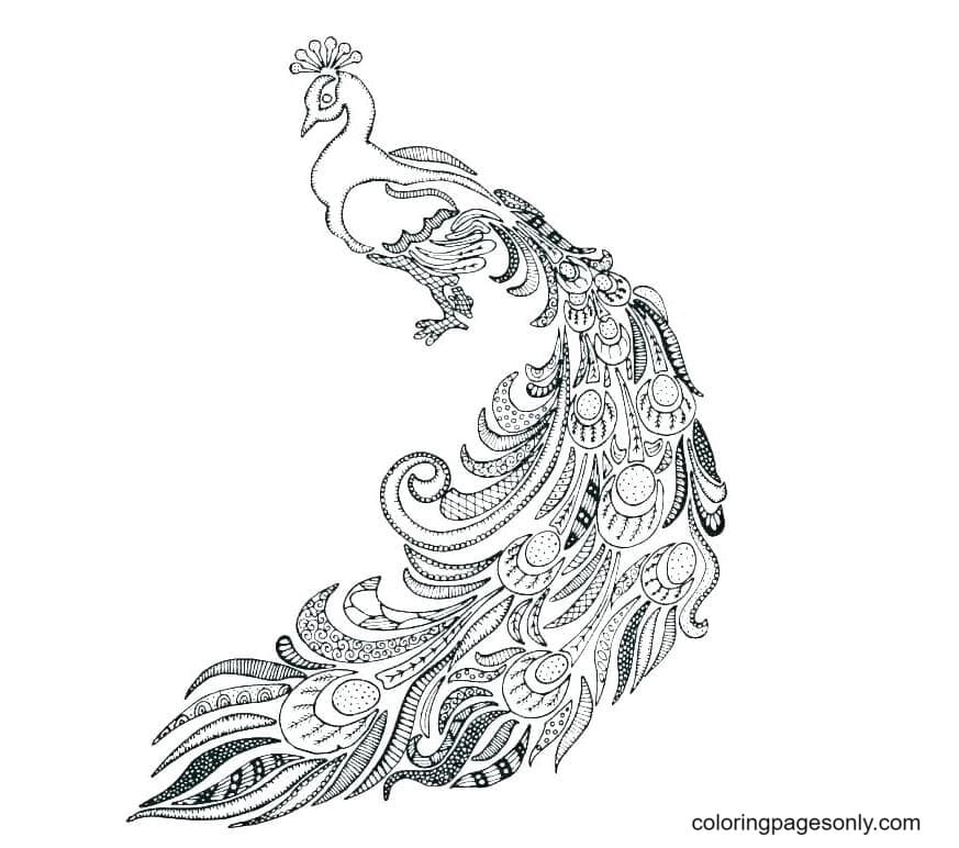 Printable Peacock 3 Coloring Page