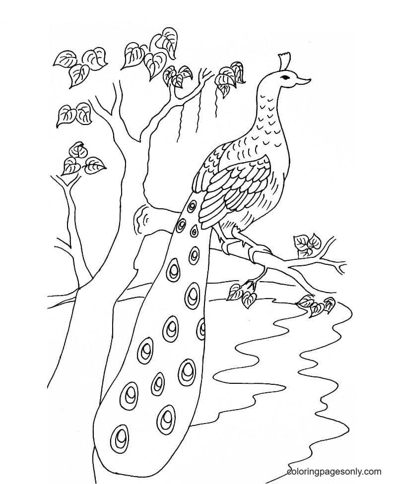 Printable Peacock Coloring Page