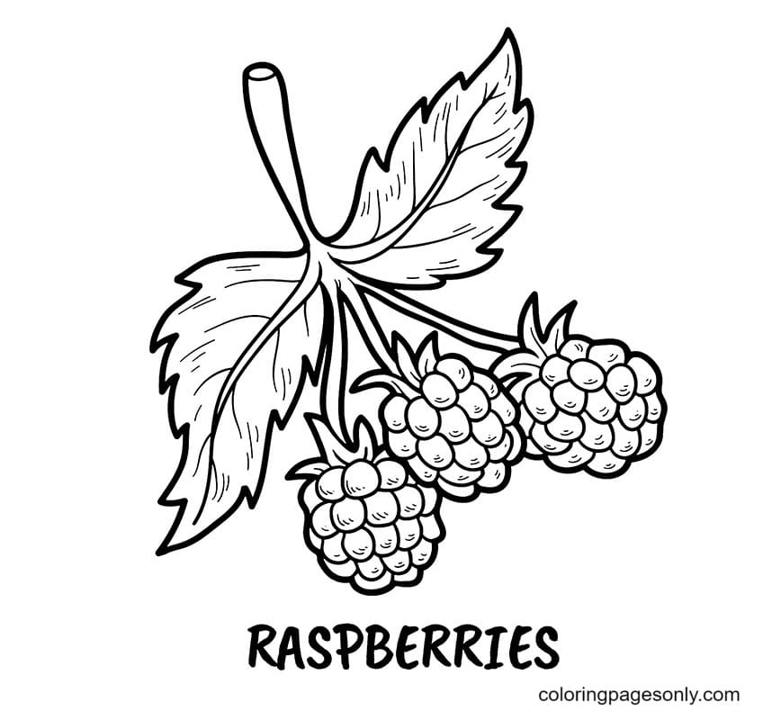 Raspberries Coloring Page