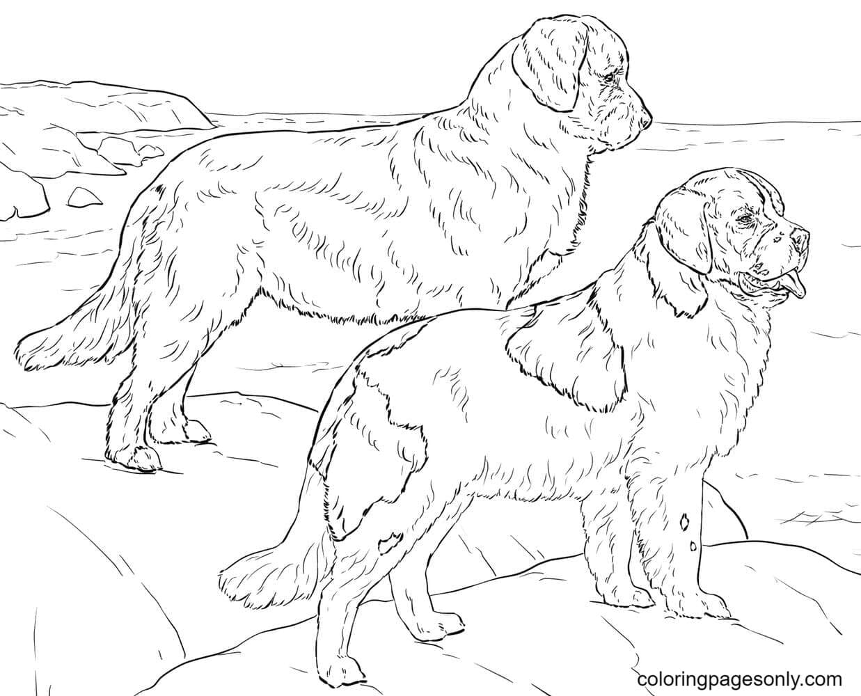 Realistic German Shepherd Dogs Coloring Page