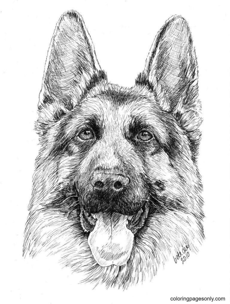 Realistic German Shepherd Drawing Coloring Page
