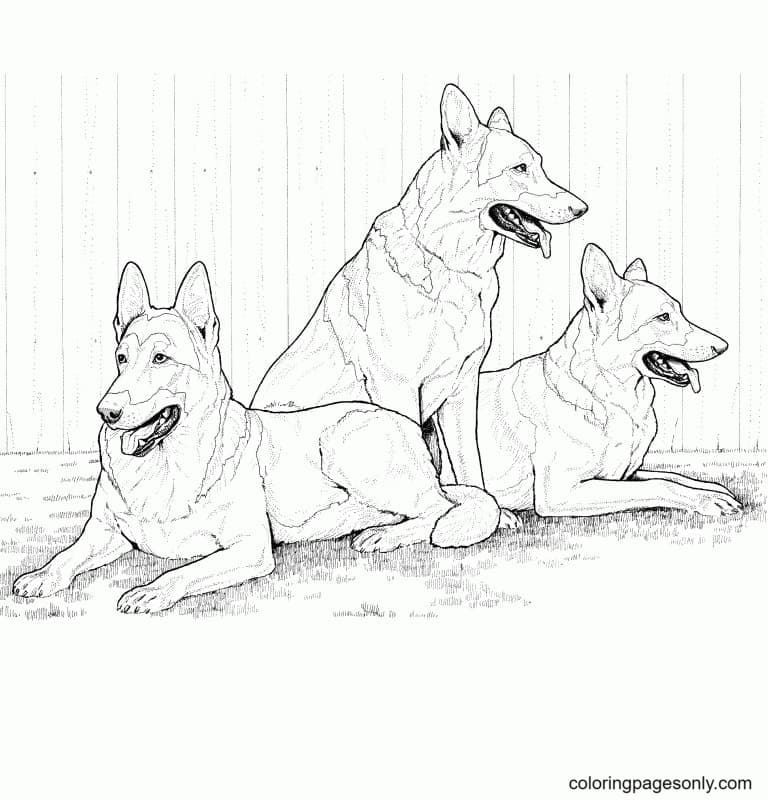 Realistic German Shepherds Coloring Page