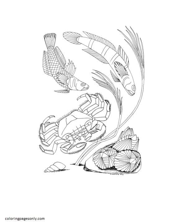 Sea Crab Shellfish Coloring Page