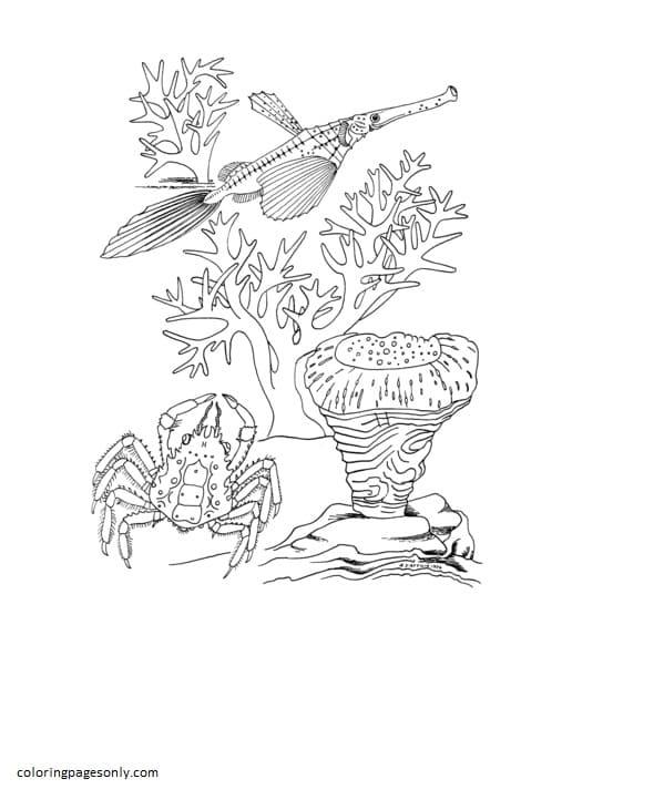Sea Crab and Trumpet Fish Coloring Page