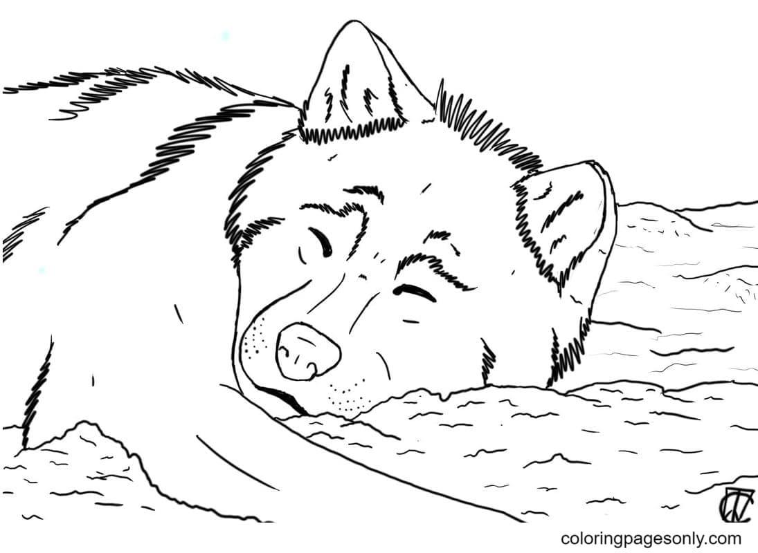 Sleeping German Shepherd Coloring Page