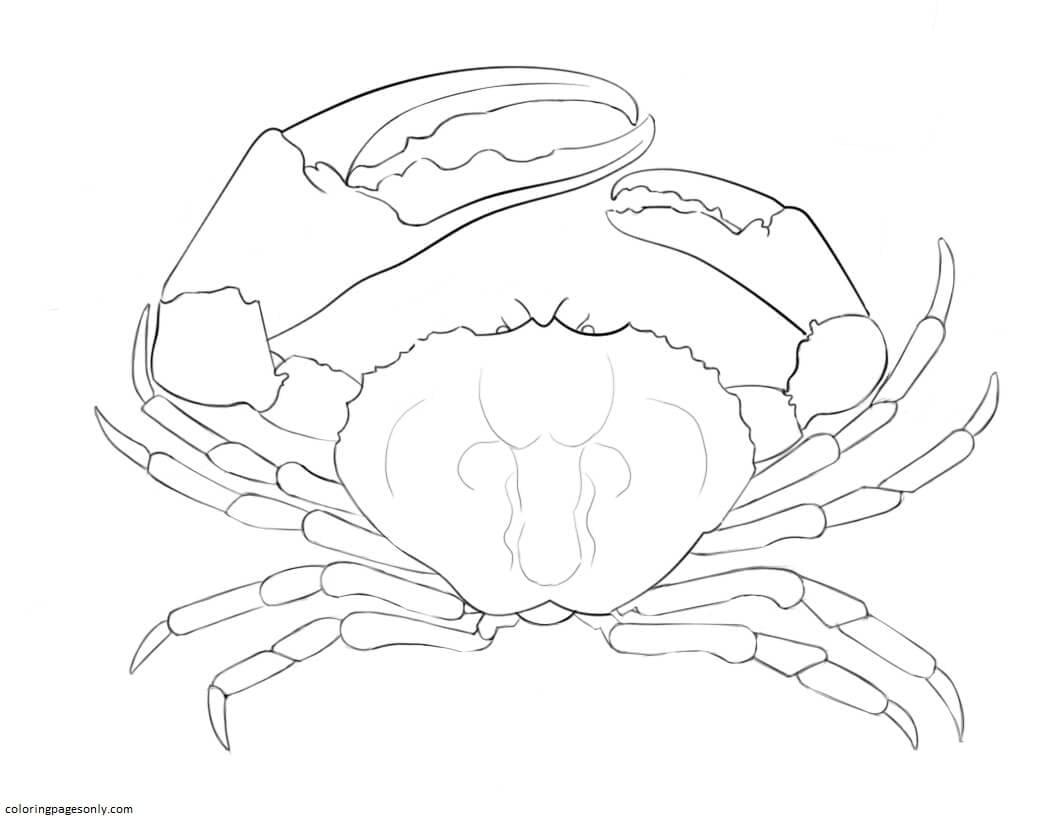 Tasmanian Giant Crab Coloring Page