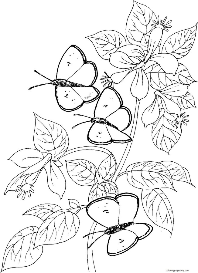 Three Butterflies Coloring Page