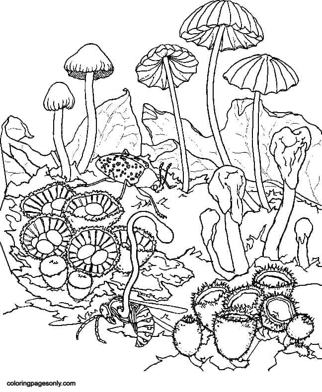 Trippy Mushrooms 2 Coloring Page
