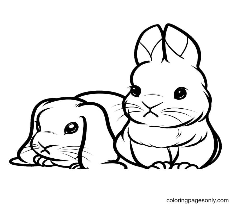 Two Cute Bunnies Coloring Page