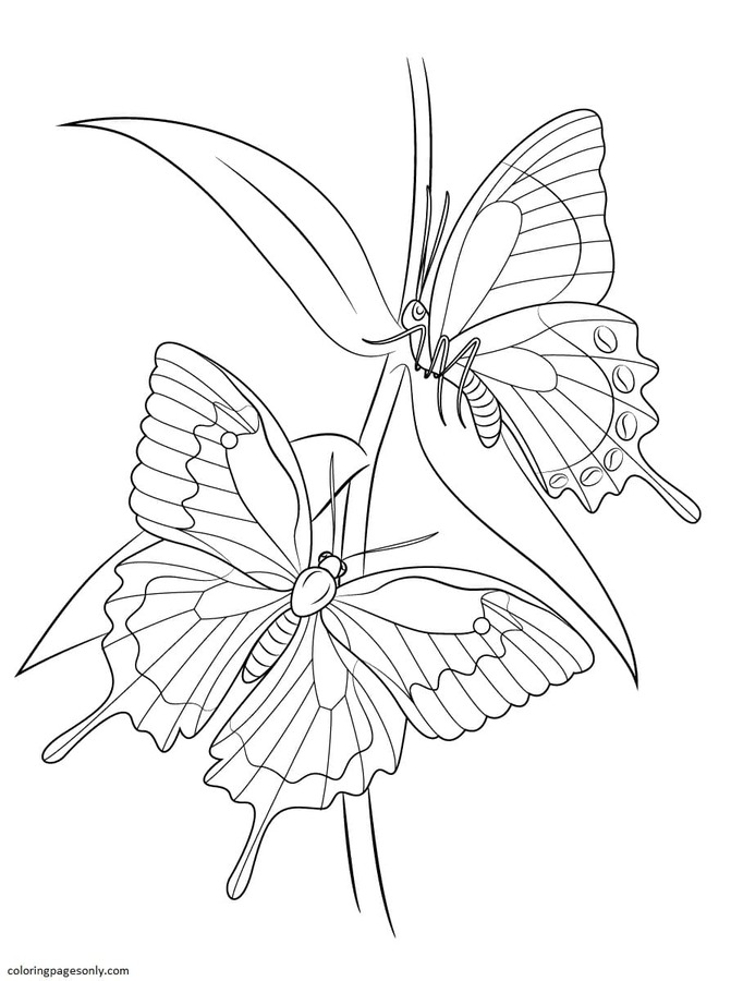 Ulysses Butterflies Coloring Page