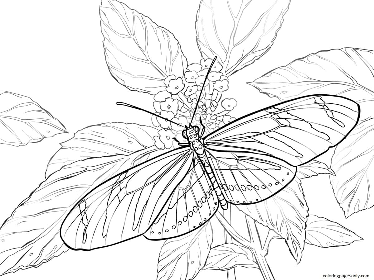 Zebra Longwing Coloring Page