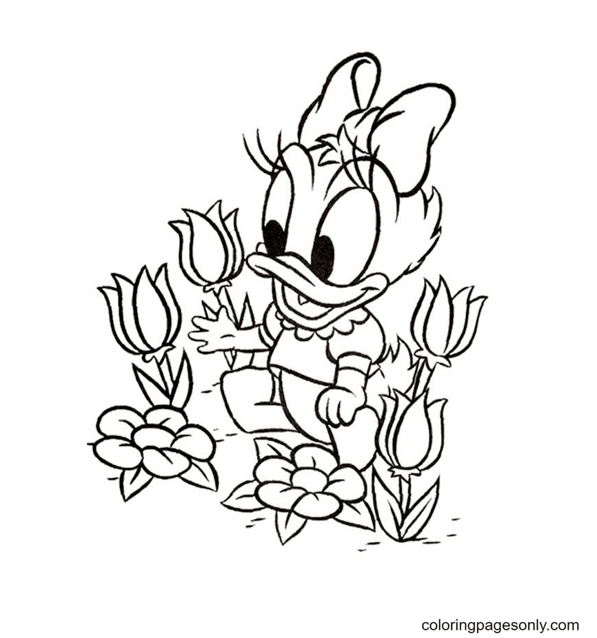 Baby Daisy Duck Picking Flower Coloring Page