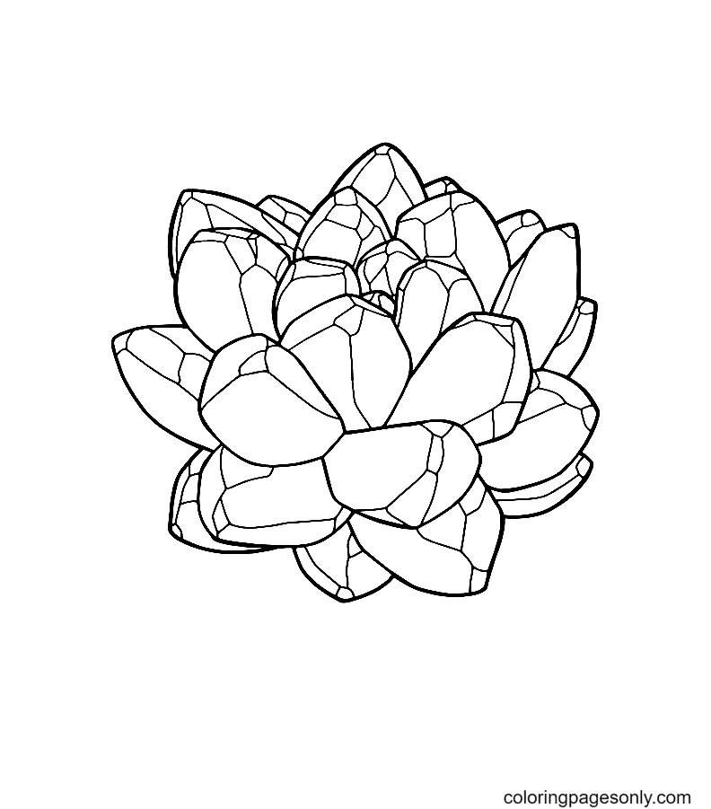 Crystal like succulent Coloring Page