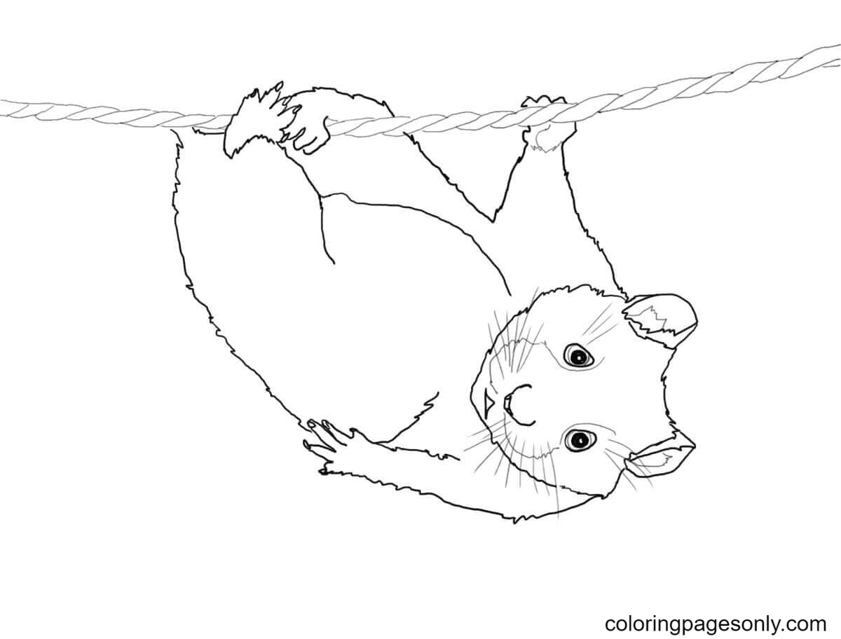Cute Hamster Hanging on a Rope Coloring Page