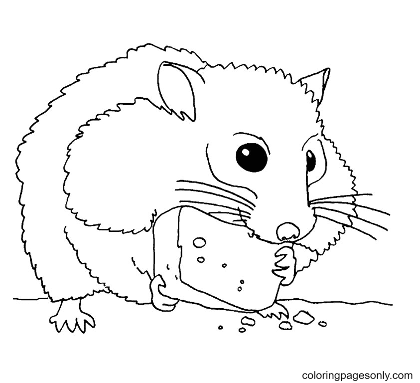Hamster Eat Cheese Coloring Page