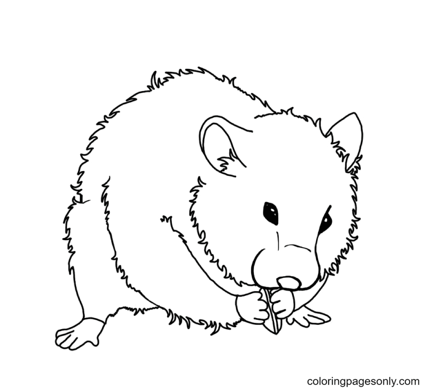 Hamster eat nut Coloring Page