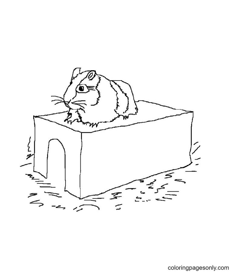 Hamster on its Limps Coloring Page