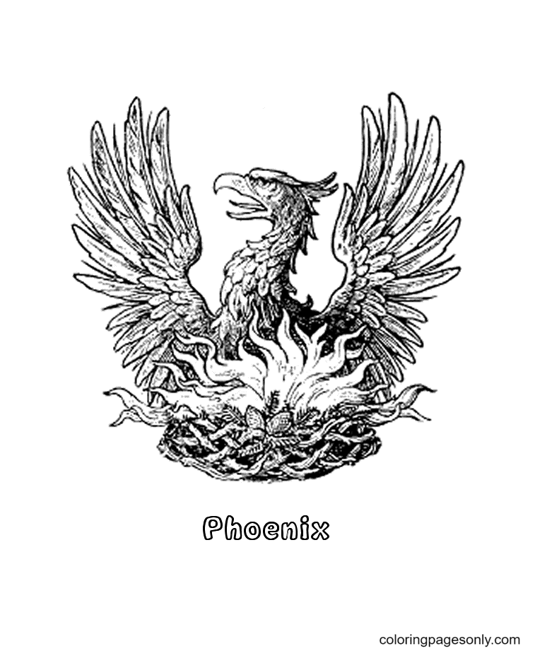 Phoenix Drawing Coloring Page