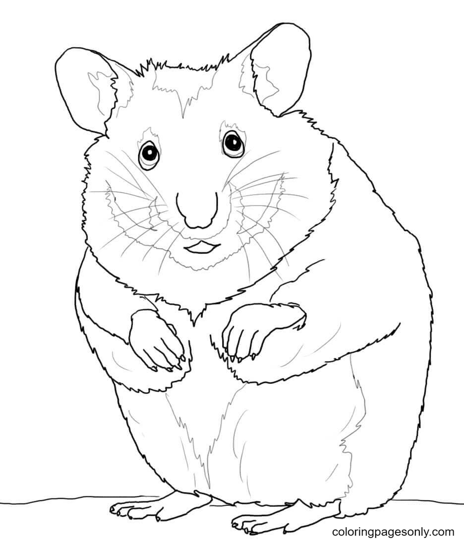 Printable Hamster Coloring Page