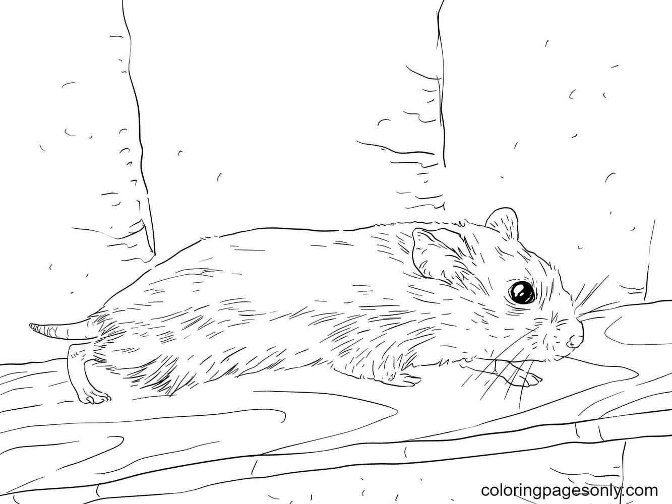 Roborovski Dwarf Hamster Coloring Page