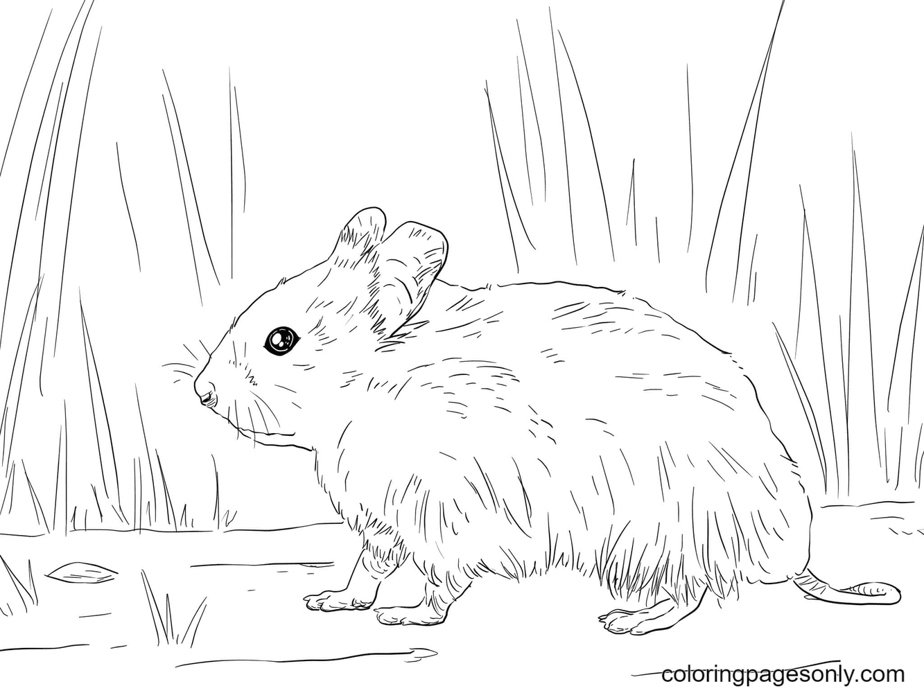 Syrian Hamster Coloring Page
