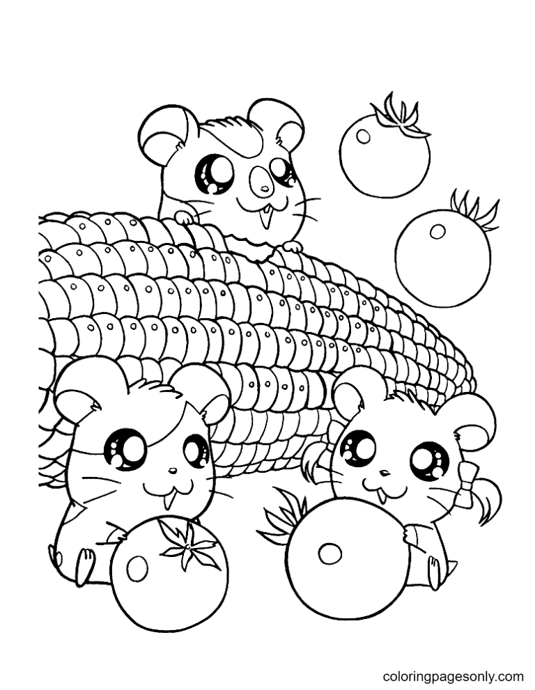 Three Hamsters Eat Corn Coloring Page