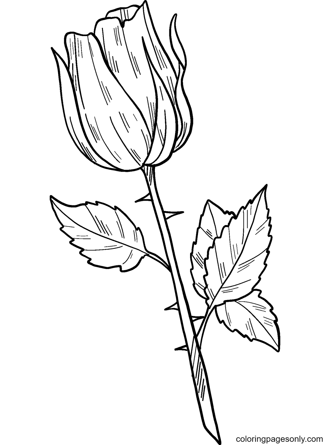 A Simple Rose Coloring Page