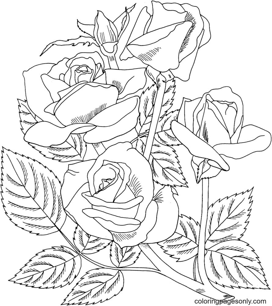 Arizona Grandiflora Rose Coloring Page