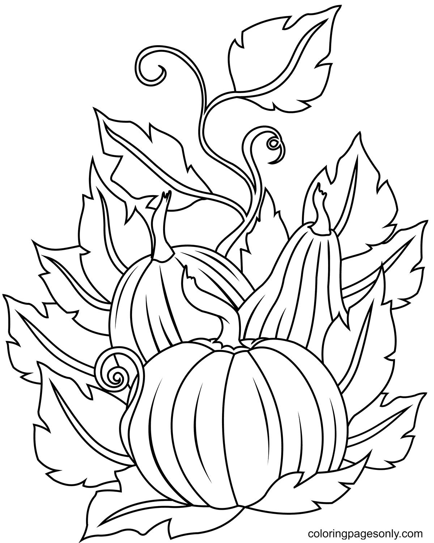 Attractive Pumpkins Coloring Page