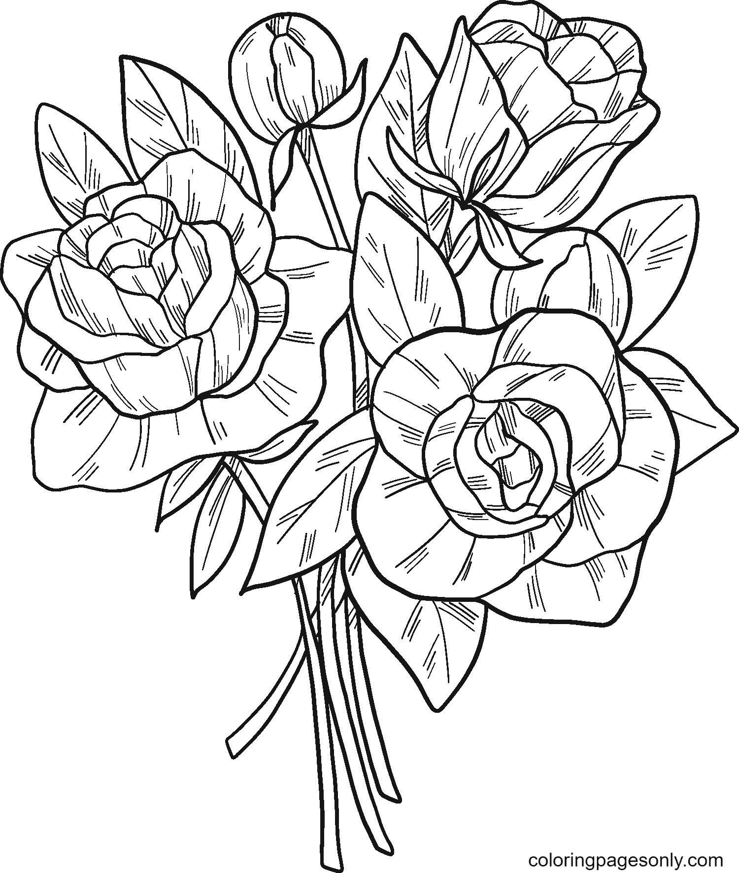 Beautiful Roses Coloring Page