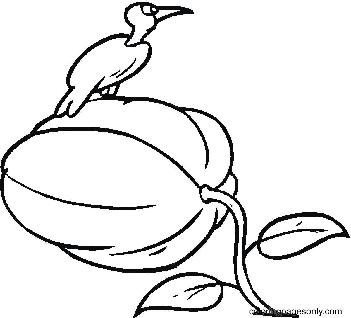 Bird on The Top of Pumpkin Coloring Page