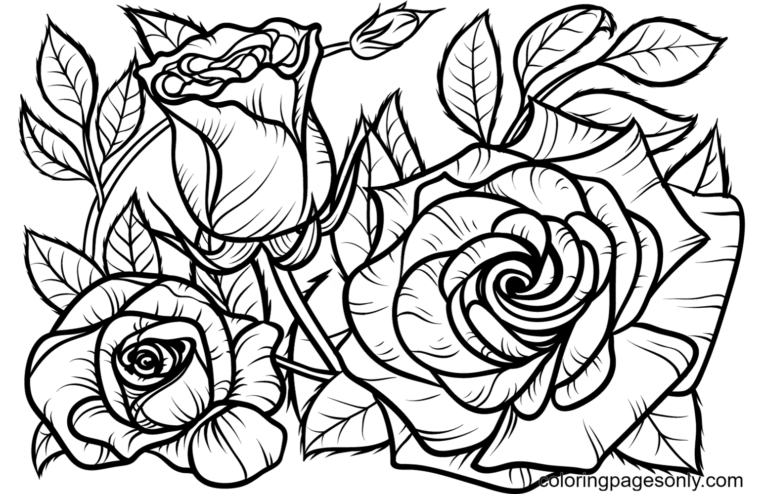 Brilliant Roses Coloring Page