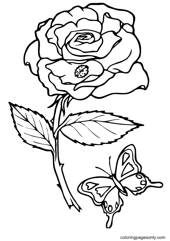Bug And Butterfly on Rose Coloring Page