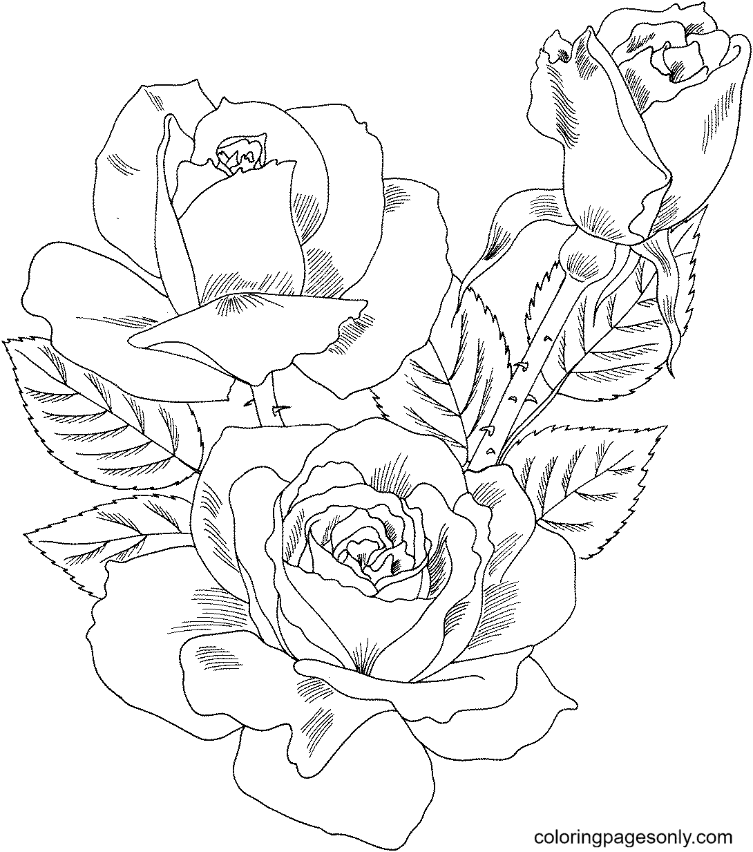 Double Delight Hybrid Tea Rose Coloring Page