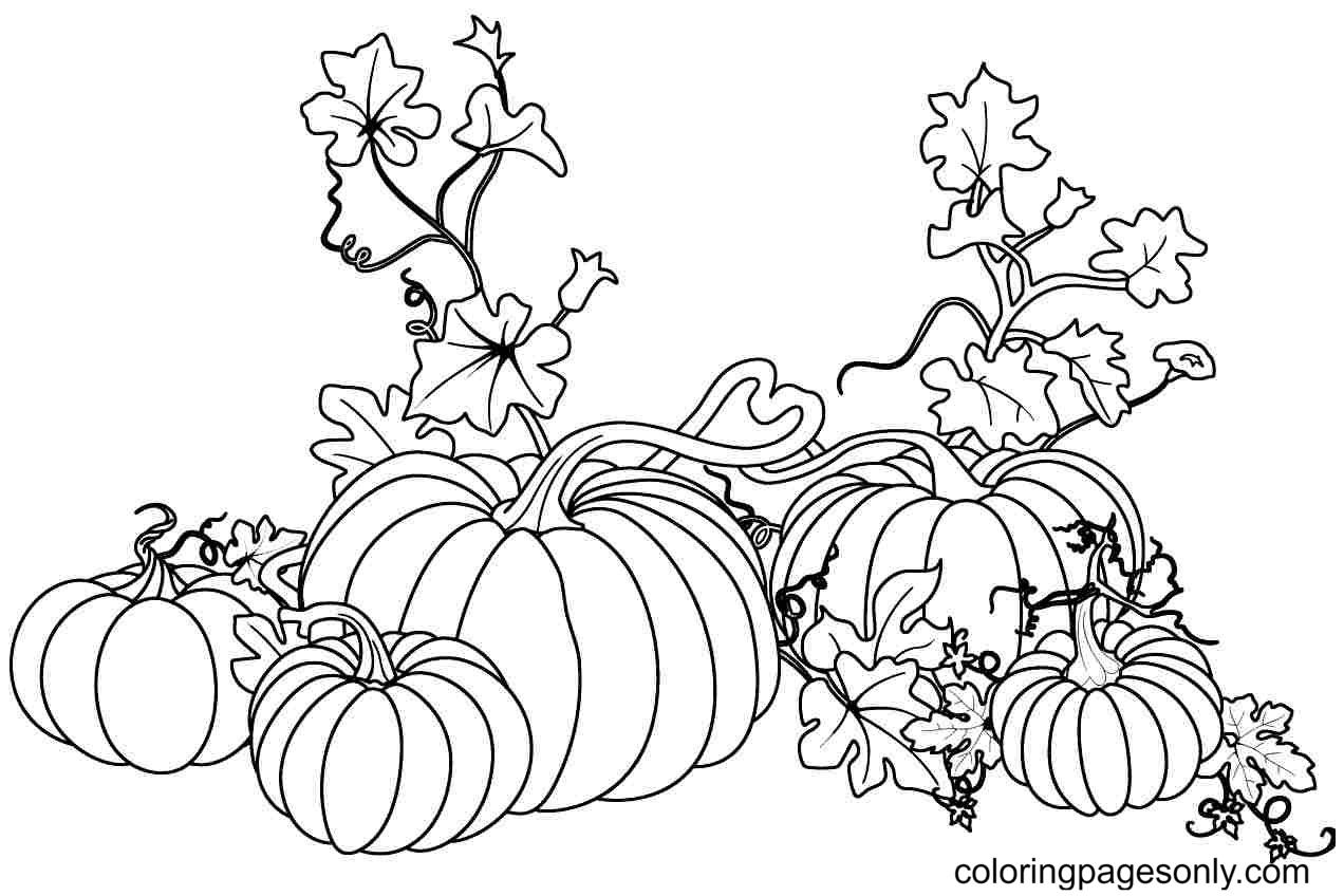 Fresh Pumpkins Coloring Page
