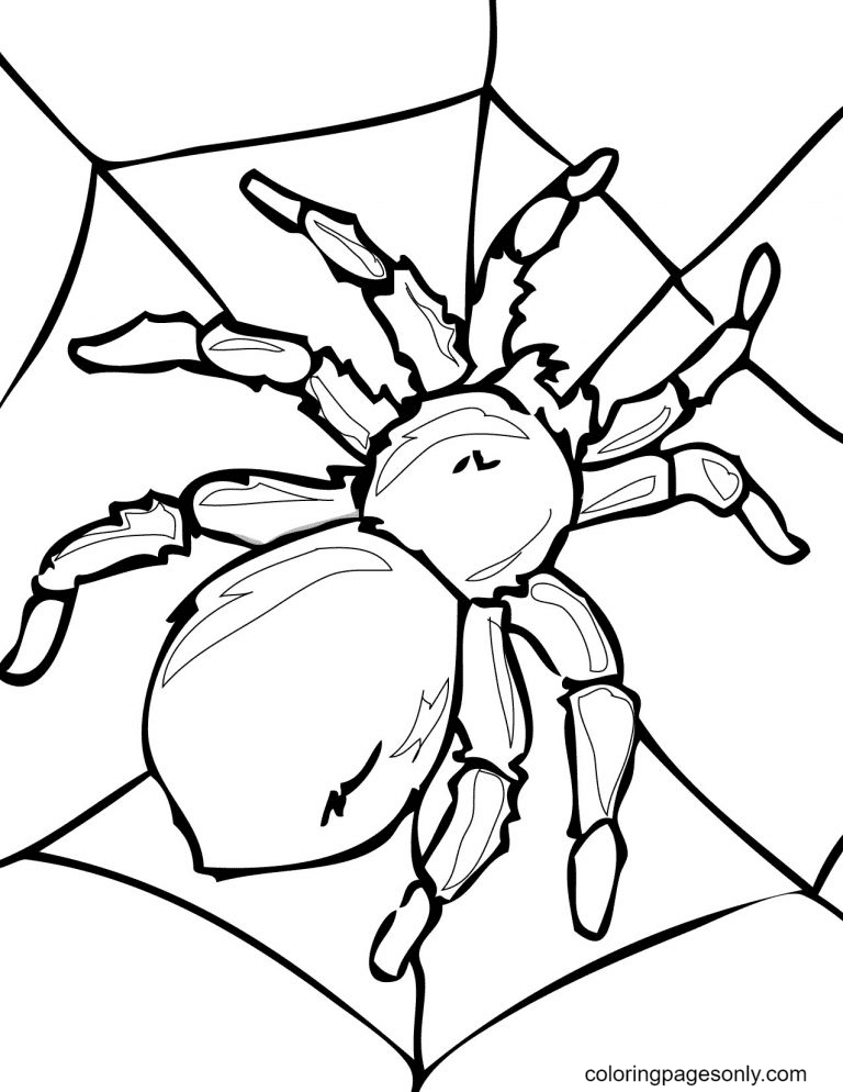 Halloween Spider Printable Coloring Page
