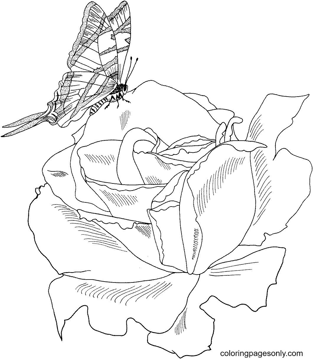 Parade Bush Rose with Butterfly Coloring Page