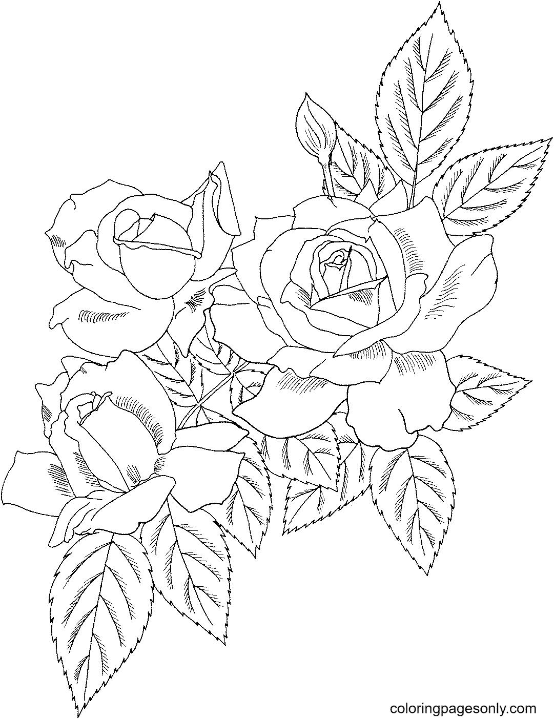 Polyantha Rose Bush Coloring Page