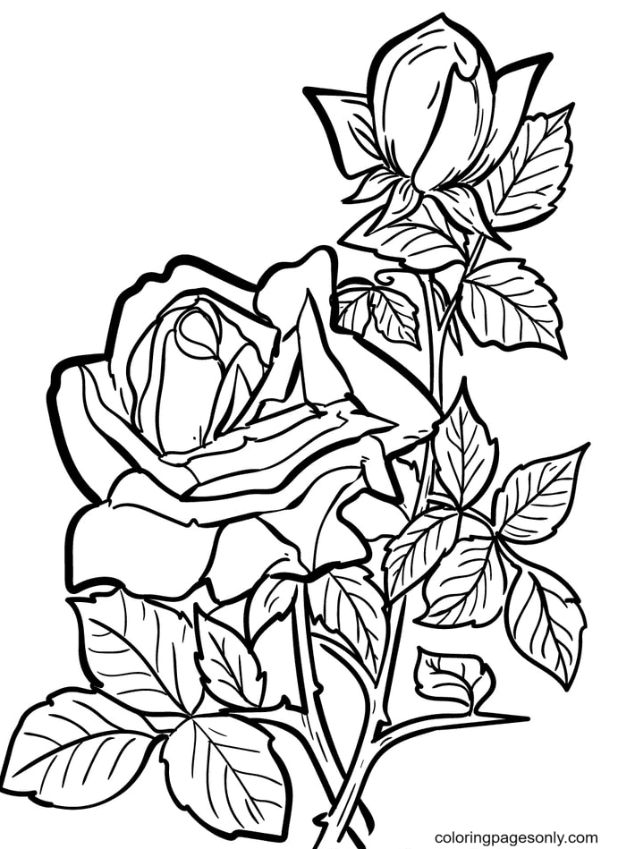 Pretty Roses Coloring Page