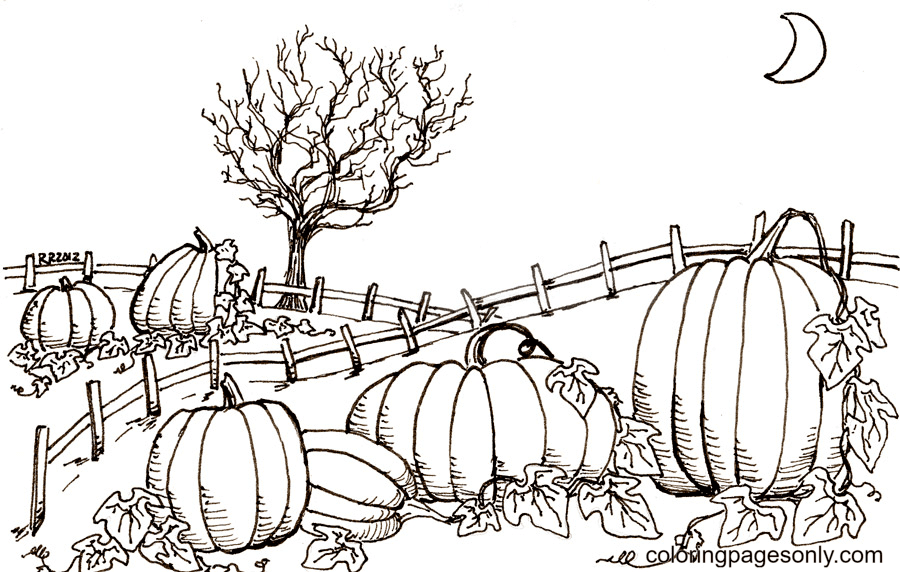 Printable Pumpkin Patch Coloring Page