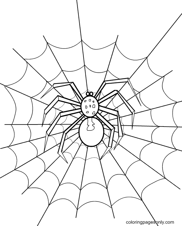 Printable Spider Coloring Page